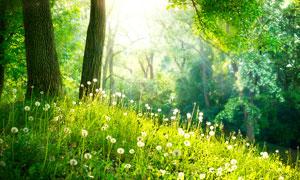 森林中美丽的花草摄影图片