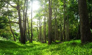 绿色草地和森林美景摄影图片