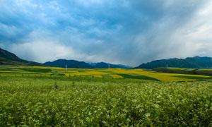 田园唯美的油菜花地摄影图片