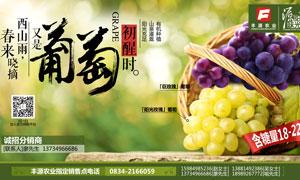 夏季葡萄宣传海报设计PSD源文件