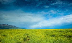 田园美丽的油菜花地美景摄影图片