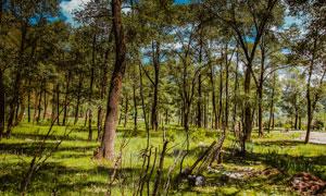 公园美丽的树林景观摄影图片