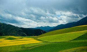 山间美丽的油菜花地高清摄影图片