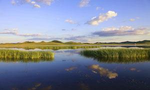 蓝天下的湿地草丛美景摄影图片