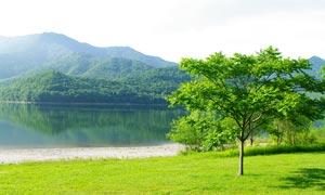 湖边绿色草地和绿树摄影图片