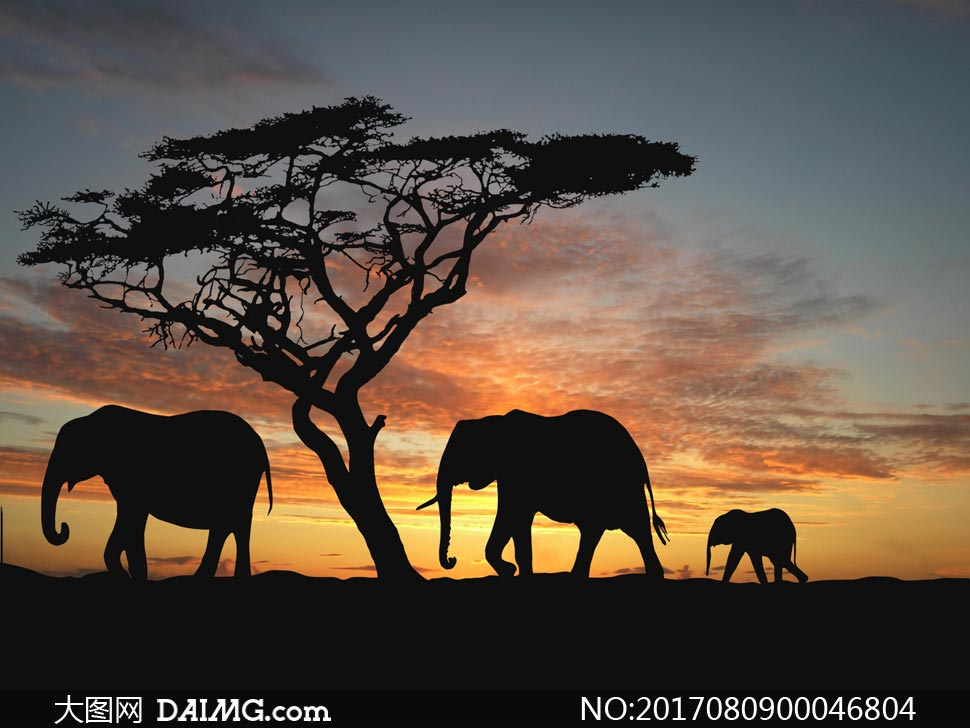 关 键 词: 大象小象动物剪影黄昏傍晚晚霞夕阳晚霞落日日落天空树木