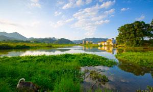 杭州美丽的湿地公园摄影图片