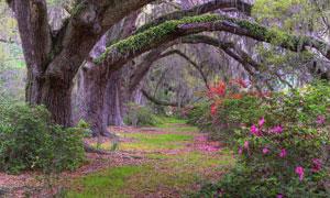 公园里美丽的大树美景摄影图片