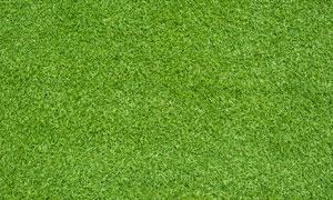 绿色草地背景高清摄影图片