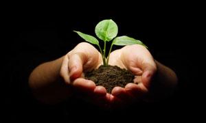 捧在手心的土壤与植物幼苗高清图片