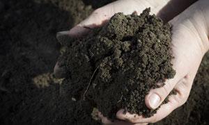 用双手捧着的土壤特写摄影高清图片