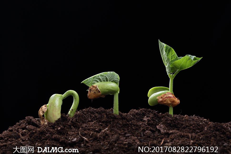 不同生长过程中的植物幼苗高清图片图片
