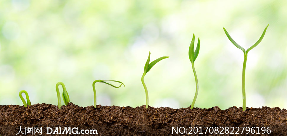 展示植物幼苗生长过程效果高清图片