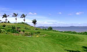 海边美丽的绿色草地摄影图片