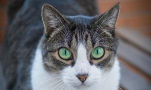 长椅上的绿眼猫咪特写摄影高清图片