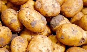 品质优良的小土豆特写摄影高清图片