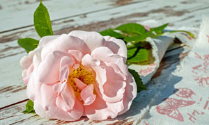 桌上带着绿叶的一束花摄影高清图片