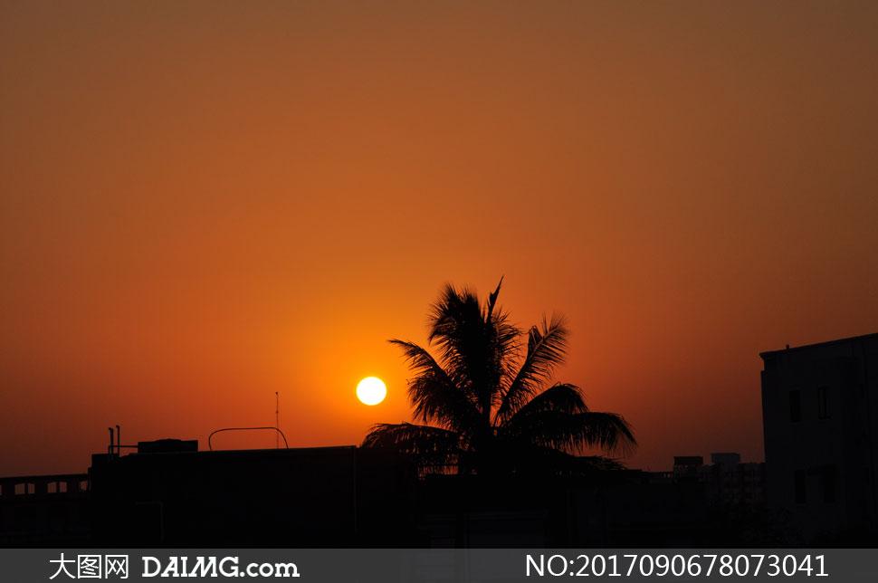 夕阳下的椰树剪影效果摄影高清图片