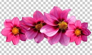 粉红色的花朵主题免抠设计高清图片