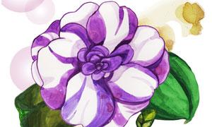 白紫两色相间花卉植物插画分层素材