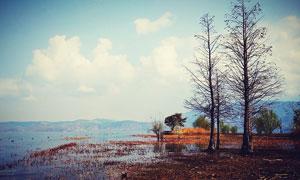 洱海美丽的湿地风光摄影图片