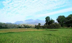 田园美丽的稻田风光摄影图片