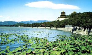 颐和园美丽的荷花池摄影图片