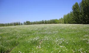 蓝天下的花草和树木摄影图片