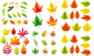 多种颜色形态颜色秋天树叶矢量素材