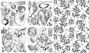 南瓜与白菜等黑白效果蔬菜矢量素材