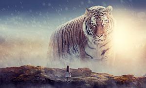山顶�t望老虎的小女孩场景PS教程素材