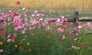 春天粉红色花草丛风光摄影高清图片