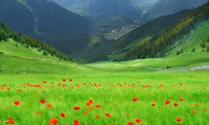 蓝天白云山峦鲜花草丛摄影高清图片