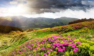 山坡上的鲜艳花草风光摄影高清图片