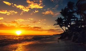 椰樹剪影與天邊的夕陽攝影高清圖片