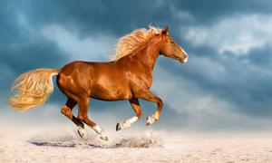 腾在半空中的一匹骏马摄影高清图片