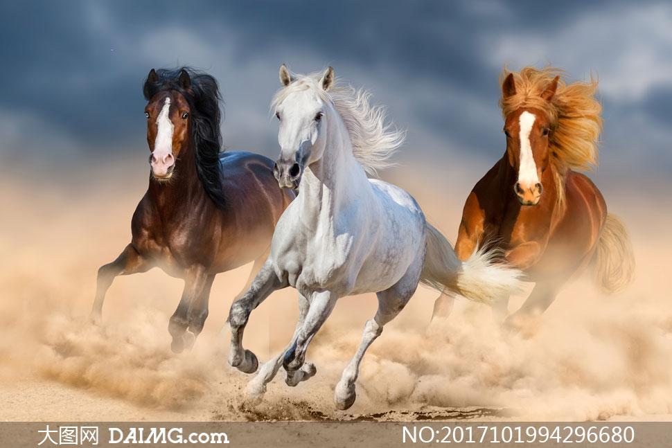 沙尘中奔跑的三匹骏马摄影高清图片