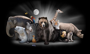 大象犀牛与河马长颈鹿摄影高清图片