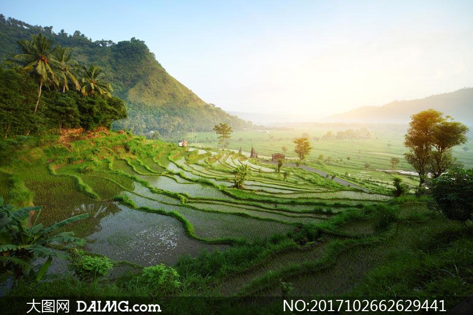 印尼的巴厘岛梯田风光摄影高清图片