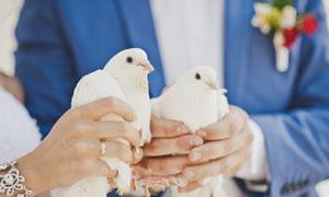 拿手里的一对白鸽特写摄影高清图片