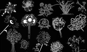 创意的线描花朵装饰PS笔刷