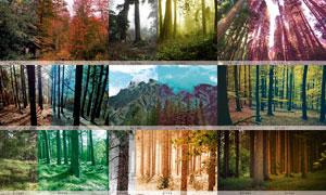 森林照片梦幻唯美艺术效果LR预设