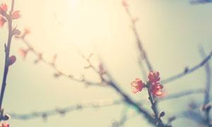 树枝上的红色小花特写摄影高清图片