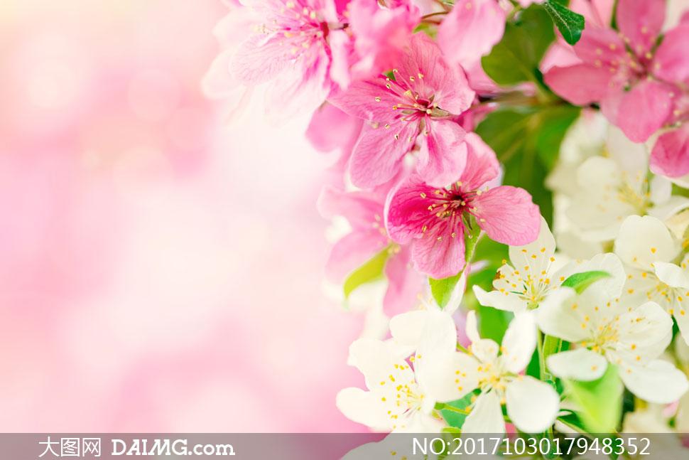 春天里怒放的红色花朵摄影高清图片         树枝上粉红色小花