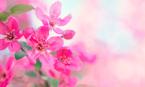 春天里怒放的红色花朵摄影高清图片