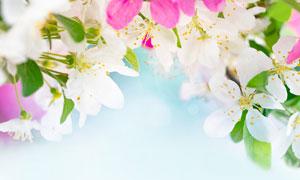春天里盛开的鲜花微距摄影高清图片