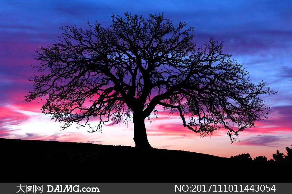高清图片 自然风景 > 素材信息          被青苔慢慢蚕食的大树摄影高