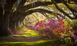 古树与鲜艳的花卉植物摄影高清图片