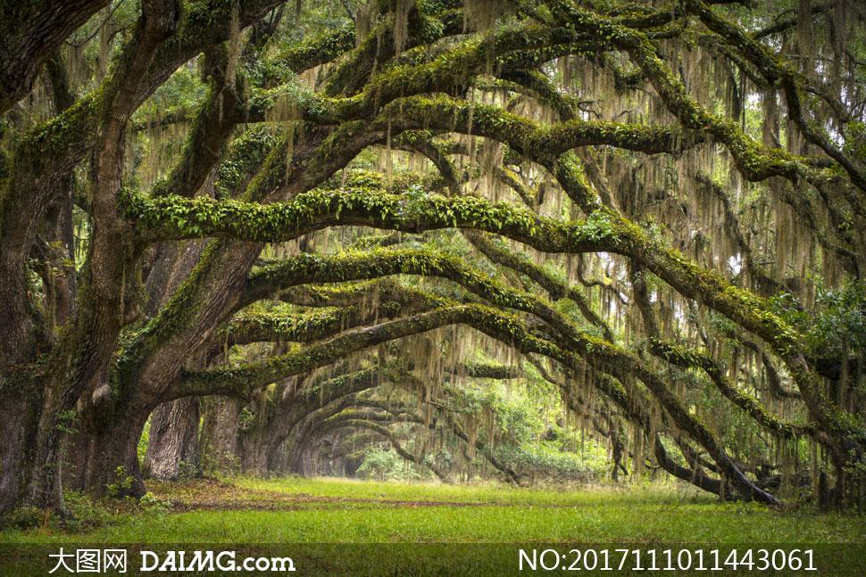 关 键 词: 高清摄影大图图片素材自然风景风光植物大树树木树林藤蔓