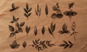 植物和绿叶装饰PS笔刷